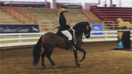 Reserve National Pleasure Gelding for lease